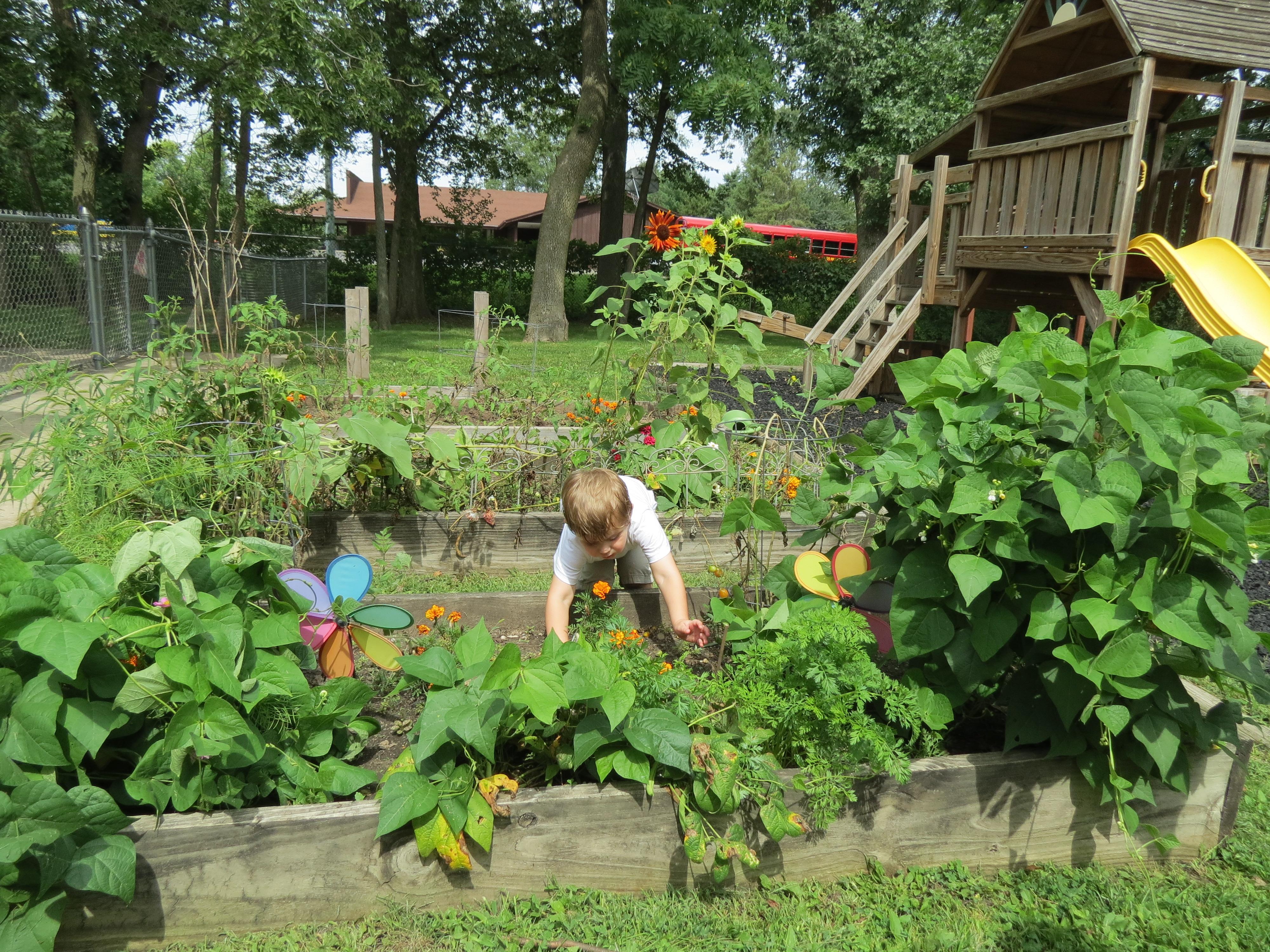 Exceptionnel Wisconsin School Garden Initiative (WSGI)